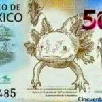 como será el nuevo billete de 50 pesos