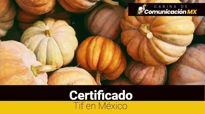 Certificado Tif en México: Qué es, sus requisitos y qué es Tif