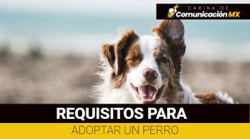 Requisitos para adoptar un Perro: Adoptame México, Rescate animal y centro de Transferencia Canina