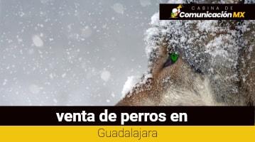 Venta de perros en Guadalajara