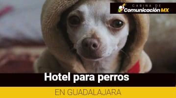 Hotel para perros en Guadalajara