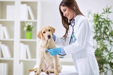 veterinarias en monterrey-1