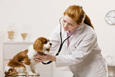 veterinarias en monterrey-4