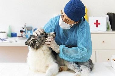 veterinarias en monterrey-5